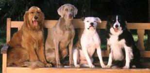dogline.jpg
